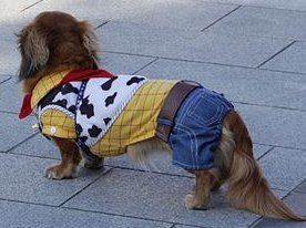 See? Dogs can be stylin too!